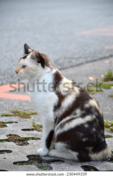 Close-up of a street cat wild cat domestic animal