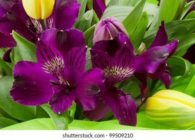 Close-up studio photograph of a bouquet of purple Alstroemeria flowers.