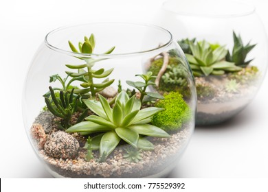 Close-up of a succulent arrangement in a glass vase (terrarium)