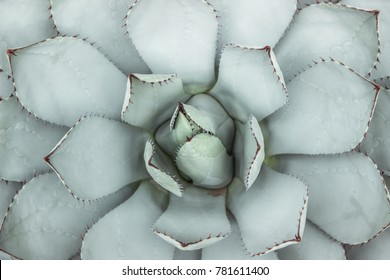 closeup of succulent plant with thorn