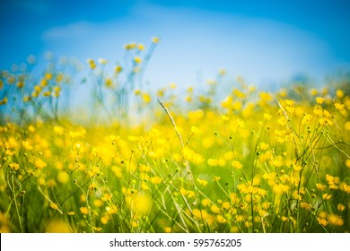 Closeup summer nature landscape. Inspirational flowers with blurred background