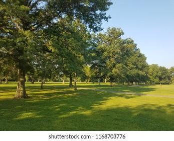 Closeup Summer park