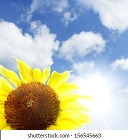 Closeup of sunflower and bright sky
