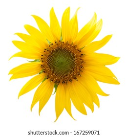 Close-up of a sunflower on white background