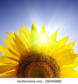 Close-up of sunflower over blue sky