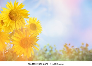 Closeup of sunflower,copyspace for your text.