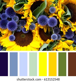 Closeup or sunflowers and allium flowers, in a colour palette with complimentary colour swatches.