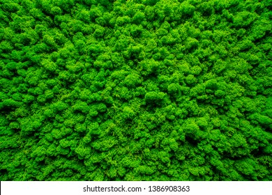 Close-up surface of the wall covered with green moss. Modern eco friendly decor made of colored stabilized moss. Natural background for design and text. Looks like a forest from a bird's eye view