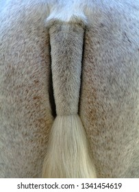 Closeup of the tail of a lipizzaner stallion in Jerez, Spain