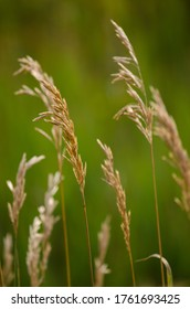 Close-up of tall grasses in a meadow.