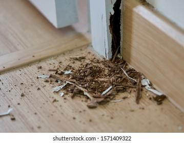 Termite Infestation Images Stock Photos Vectors Shutterstock