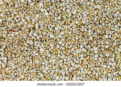 Closeup texture of dried Chinese pearl barley, Job's tears grains, known as Adlay millet (Coix lacryma-jobi)