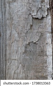 Close-up of the texture of a split tree
