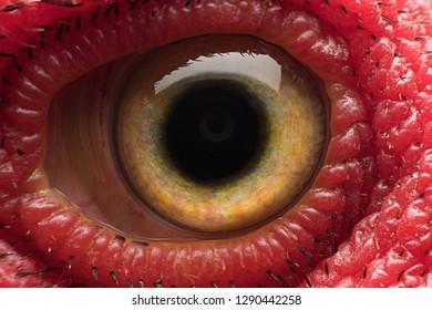 Closeup Thai Cockfight's eye, chicken eye, very sharp and clear