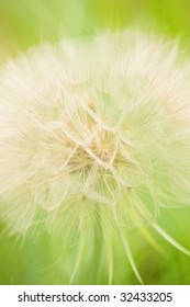 close-up of a thistle