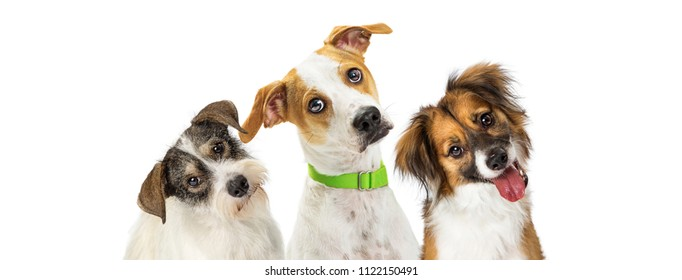 Close-up three cute dogs tilting heads to listen with attention while looking forward at camera. Horizontal web banner with room for text.