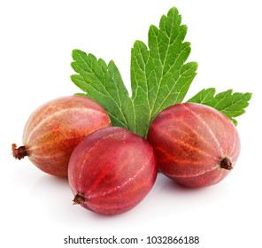 Closeup of three ripe red gooseberry berry with gooseberry leaf isolated on white background