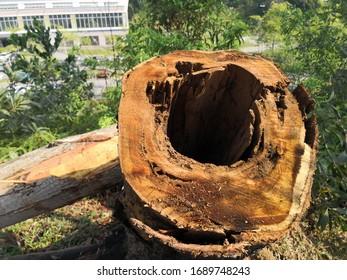 Nahaufnahme des Holzbaums auf dem Waldboden mit Loch im Kofferraum.
