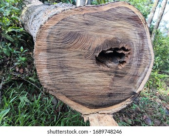 Close-up of timber log on forest floor with hole in trunk.