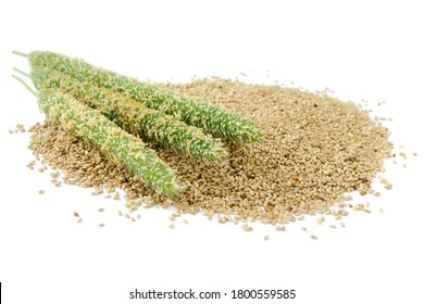 Closeup of timothy grass and seeds isolated on white background. Green timothy (Phleum pratense) sultan and freshly harvested seeds close-up. Timothy seeds with panicle isolated on white.