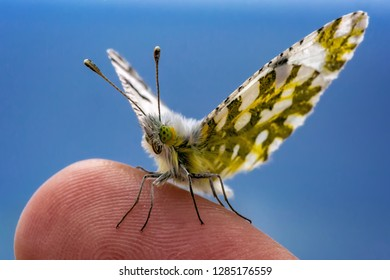 Closeup of a tiny butterfly sitting on a finger