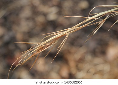 Closeup of the Tip of a Blade of Brown Sage Grass with a Blurry Rocky Road in the Background
