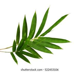 Close-up top view bamboo leaves isolated on white background. Green leave pattern texture with clipping path and copyspace.