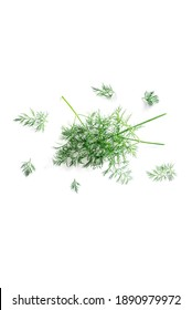 Close-up top view of fresh organic dill from the garden isolated on a white background