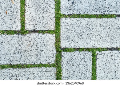 Closeup top view of white old paving slabs and cute tiny green grass growing among them. Horizontal color photografy.