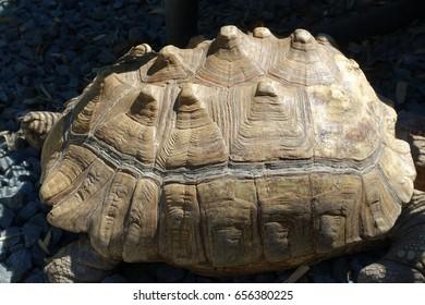 Closeup of Tortoise