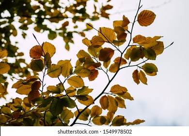 Closeup of tree leaves in autumn from France in late afternoon
