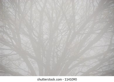 Closeup of tree on a foggy day