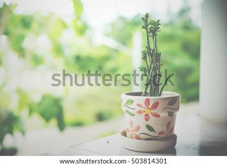 Closeup Tree Pot Home Decorate Stock Photo Edit Now 503814301