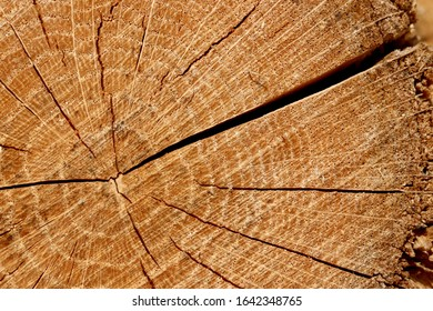 Closeup of tree rings on cut firewood