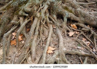 Close-up of tree roots and foliage.