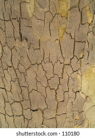 Closeup of treetrunk
