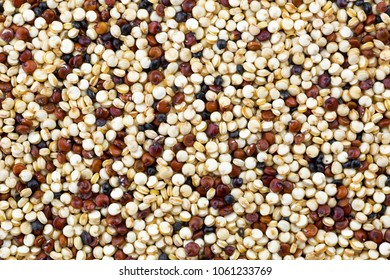 Closeup of tricolor Quinoa seeds, edible gluten-free, grain crop in amaranth family (Chenopodium quinoa)