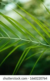 Nahaufnahme von tropischen grünen Pflanzenblättern im Wald. grüne Textur. Sommerkonzept