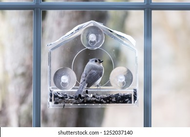 Closeup of tufted titmouse back perched on plastic window bird feeder perch on suction cups with sunflower seeds, peanut nuts, looking, eye during snow, snowing, Virginia
