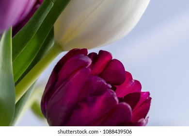 closeup of tulips
