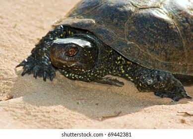 closeup turtle on a sand