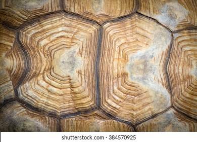 Closeup of a turtle shell