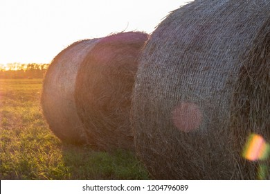 close-up of two bales of hay on the field, sun glare on the lens outdoors natural photography, feed for cows in rolls