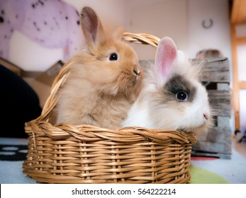 Closeup of two cute rabbits in a brown basket