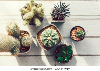 Closeup of various small cacti
