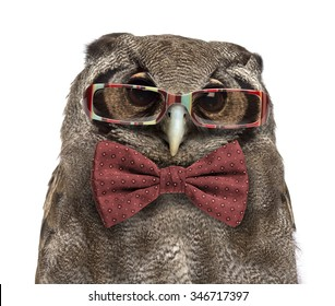 Close-up of a Verreaux's eagle-owl - Bubo lacteus (3 years old) wearing glasses and a bow tie in front of a white background