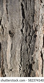 Close-up vertical shot of sunlit tree trunk with grey bark. Natural texture background concept