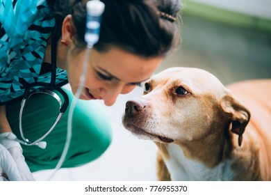 Closeup of a veterinary woman sitting near a dog for treating it