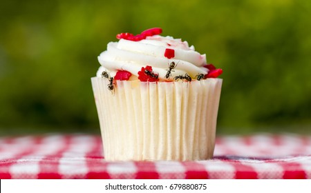 Closeup view of ants on a cupcake. There are several ants. Cupcake is on a checkered table cloth.