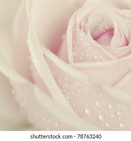 Close-up view of beatiful pink rose with water drops